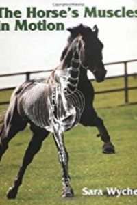 The-Horse-Muscles-in-Motion